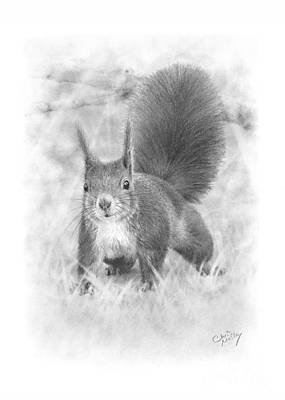Drawing - Red Squirrel by Chris Mosley