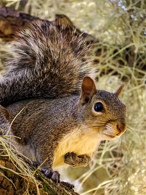 Squirrel Photograph - Squirrel Close by Zina Stromberg