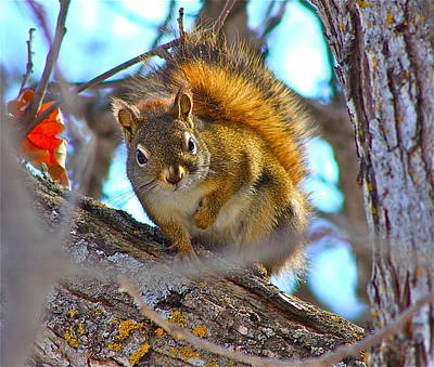 Photograph - Squirrel Duty. by Johanna Bruwer