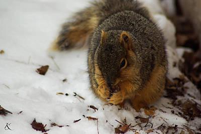 Squirrel Eating Art Print