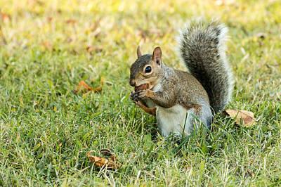 Photograph - Squirrel Food by John Ferrante