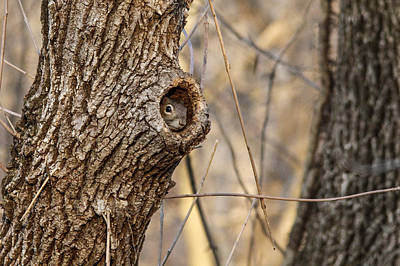 Photograph - Squirrel Hole by Jill Bell