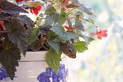Photograph - Squirrel In A Flower Pot by Peggy Collins