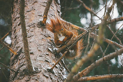 Small Forest. Beauty Photograph - Squirrel In A Tree by Pati Photography