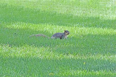 Art Print featuring the photograph Squirrel In Grass by Lorna Rogers Photography