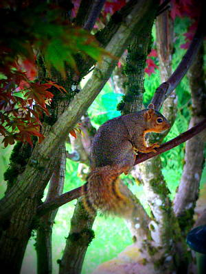 Squirrel In My Tree Art Print