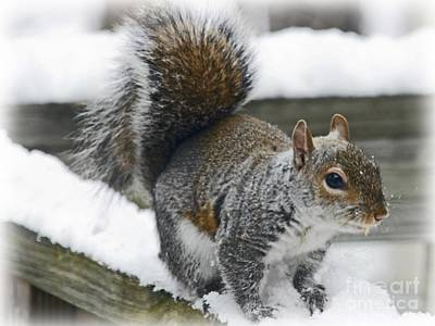 Photograph - Squirrel In The Snow by Sandra Clark