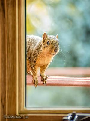 Squirrel In The Window Art Print by LeeAnn McLaneGoetz McLaneGoetzStudioLLCcom