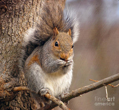 Photograph - Squirrel  by Kerri Farley