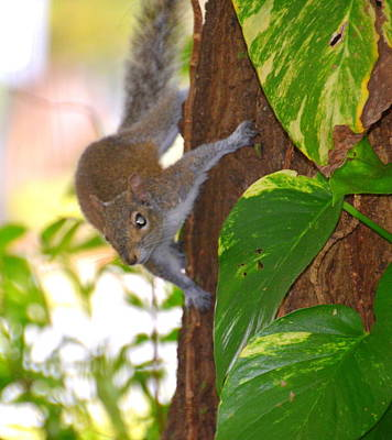 Photograph - Squirrel by Linda Rae Cuthbertson