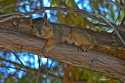 Photograph - Squirrel Looking Down On Viewer by Allen Sheffield
