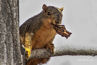 Fox Squirrel Photograph - Squirrel Lunch Time by Robert Bales