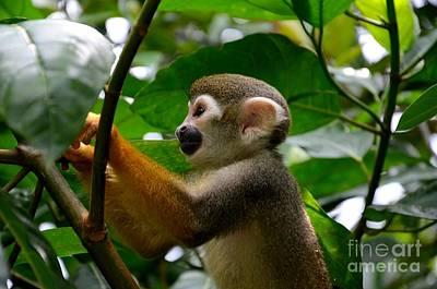 Photograph - Squirrel Monkey Climbs A Tree At Singapore River Safari Zoo by Imran Ahmed