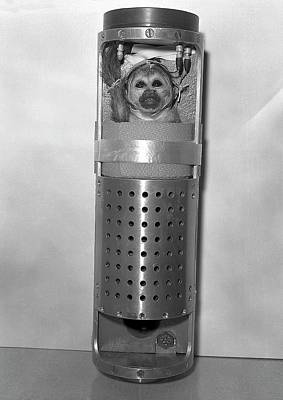 Peru Photograph - Squirrel Monkey Launch Capsule by Nasa/marshall Space Flight Center/science Photo Library