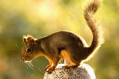 Photograph - Squirrel On A Cookie Jar by Peggy Collins