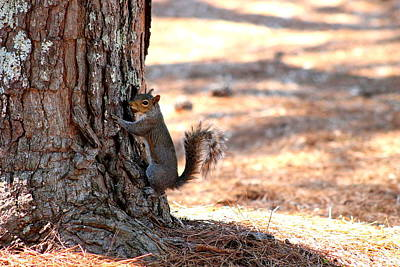 Modern Man Surf Royalty Free Images - Squirrel on a Tree Royalty-Free Image by Mary Koval