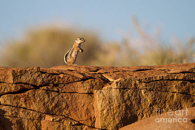 Photograph - Squirrel On An Ancient Rock Wall by Martha Marks