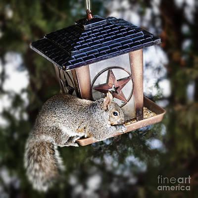 Animals Photos - Squirrel on bird feeder by Elena Elisseeva