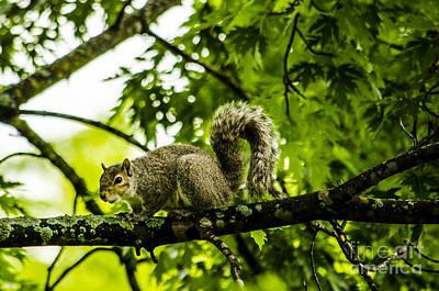 Squirrel On The Hunt Art Print by Deborah Smolinske
