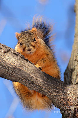 Wall Art - Photograph - Squirrel On Tree Looking At You by Susan Montgomery