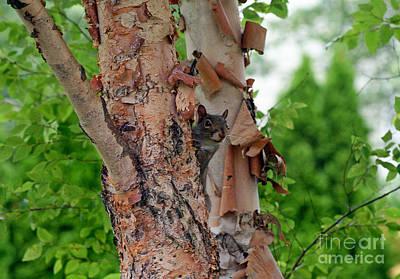 Photograph - Squirrel Peek-a-boo by Karen Adams