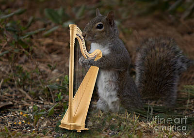 Photograph - Squirrel Playing The Harp by Sandra Clark