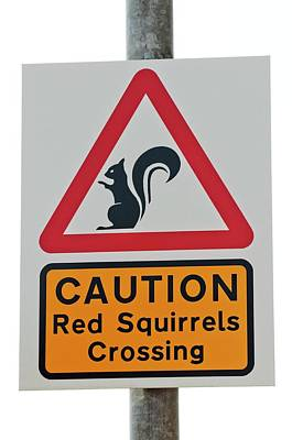 Red Squirrel Wall Art - Photograph - Squirrel Road Sign by Louise Murray/science Photo Library
