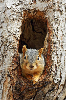 Photograph - Squirrel by Steve Javorsky