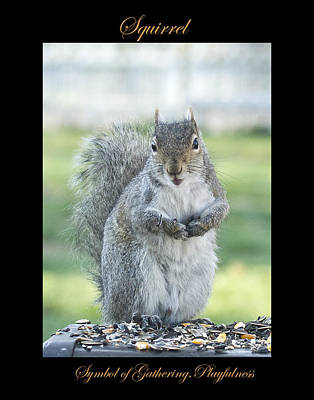 Photograph - Squirrel Symbol Of by Marty Maynard