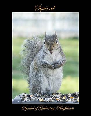 Photograph - Squirrel Symbol Of by Marty Maynard