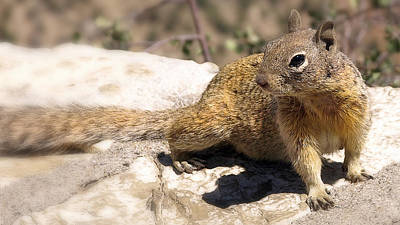 Photograph - Squirrel by Wayne Wood