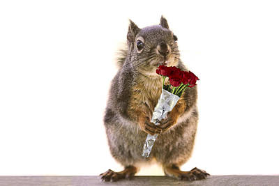 Photograph - Squirrel With A Dozen Red Roses by Peggy Collins