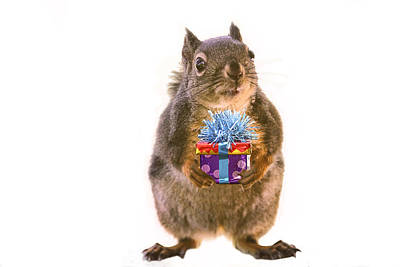 Squirrel With Gift Art Print