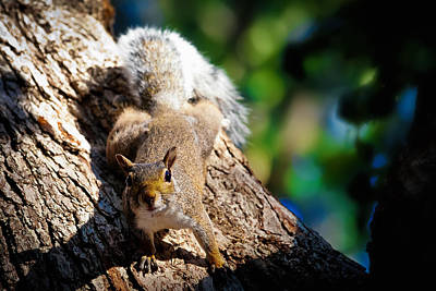 Photograph - Squirrel Zone by Sennie Pierson