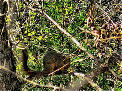 Photograph - Squirrelcomp 2009 by Glenn Bautista