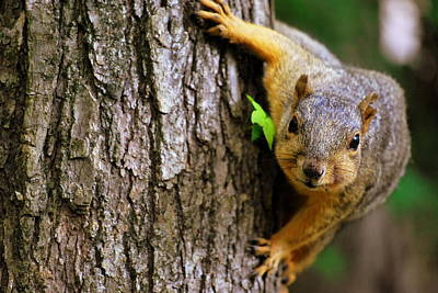 Photograph - Squirrelly by Gregory Ballos