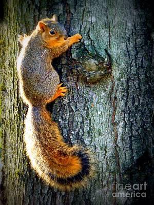 Photograph - Squirrelly Pose by Susan Garren