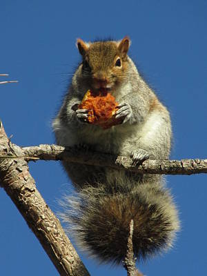 Photograph - Squirrel's Breakfast by Alfred Ng