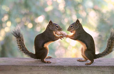 Squirrels That Share Art Print