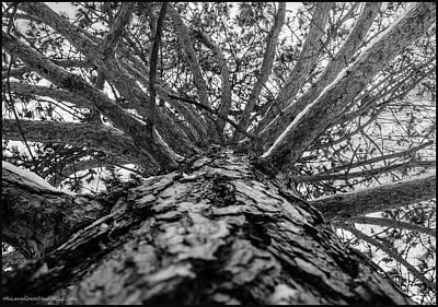 Vine Photograph - Squirrels View Looking Up by LeeAnn McLaneGoetz McLaneGoetzStudioLLCcom