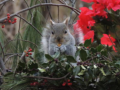 Christmas Squirrel Wall Art - Photograph - Squrrely Greetings by Deborah Bifulco