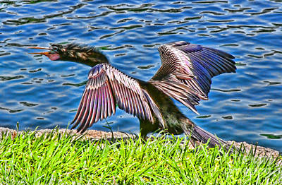 Photograph - Sqwawking Is Not Polite On Lake Eola By Diana Sainz by Diana Raquel Sainz