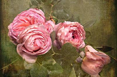 Photograph - Abraham Darby Rose by Shirley Sirois