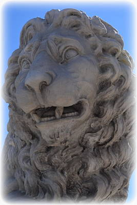 Photograph - St. Augustine Lion 1 by Sheri McLeroy
