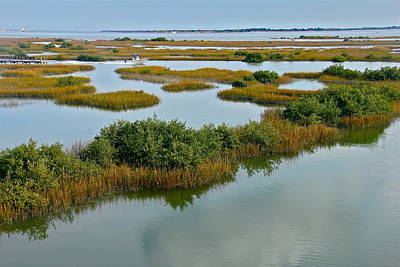 Photograph - St Augustine Marshland by Denise Mazzocco