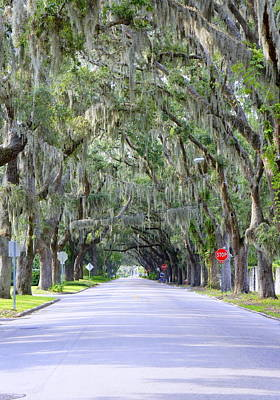 Photograph - St. Augustine Road by Laurie Perry