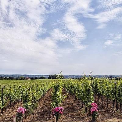 Fineartamerica Photograph - St Emilion Grand Cru Vines by Georgia Fowler