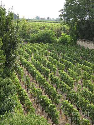 St. Emilion Vineyard Art Print