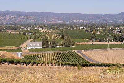 Photograph - St Helena Vineyards Napa California Dsc1739 by Wingsdomain Art and Photography
