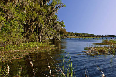 Oak Trees Photograph - St Johns River Florida by Christine Till